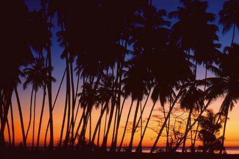 Tropical Twilight Giclee Print