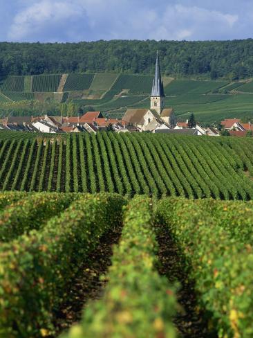 Chamery, Montagne De Reims, Champagne, France, Europe Photographic Print