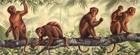 Monkey Time I Art Print