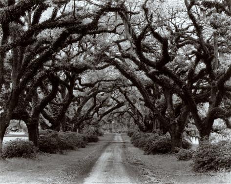 Path in the Oaks II, Louisiana Art Print