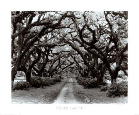 Path in the Oaks II, Louisiana Lámina