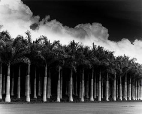 White Palms, Costa Rica Art Print