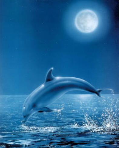 Moon Dolphin Art Print Poster Mini Poster