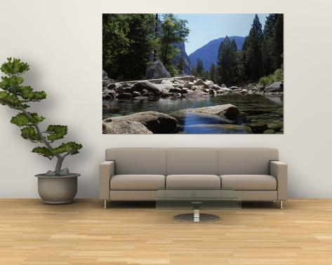 Mountain Behind Pine Trees, Tenaya Creek, Yosemite National Park, California, USA Giant Art Print