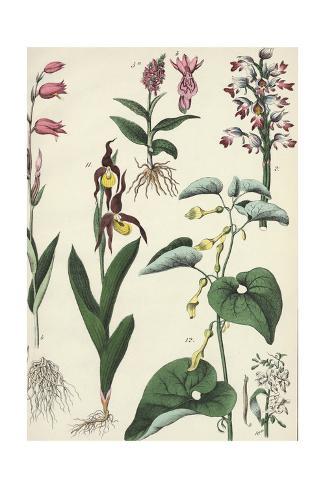 Multiple Flowering Plants on Tall Stems Art Print