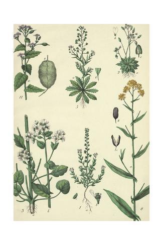 Multiple Flowering Weeds on Long Stems Art Print
