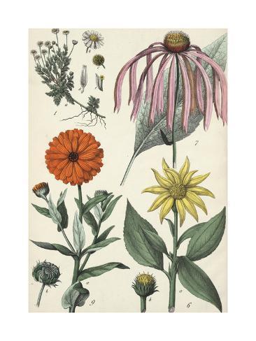 Multiple Scientific Drawings of Flowers Art Print