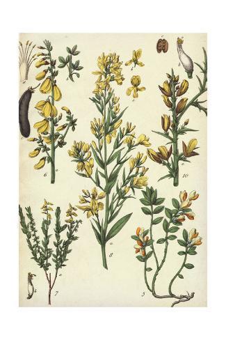 Multiple Yellow Flowering Plants Art Print