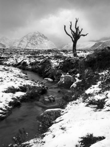 Lonely Tree in Rannoch Moor, Scotland, UK Photographic Print