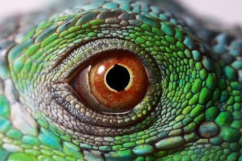 iguana eye painting - photo #36
