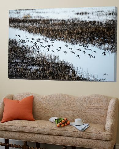 Flock Loft Art
