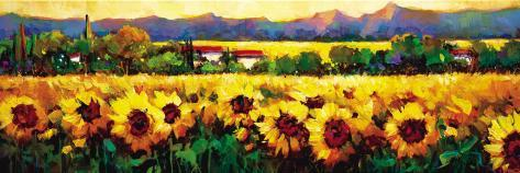 Sweeping Fields of Sunflowers Art Print