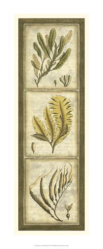 Exotic Seaweed Panel II Giclee Print
