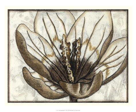 Fresco Flowerhead IV Giclee Print