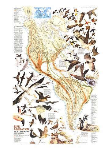 1979 Bird Migration in the Americas Map Art Print