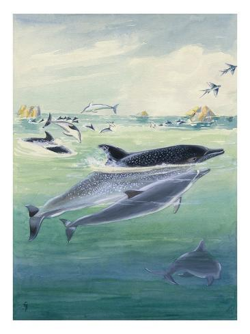 A Spinner Dolphin Calf Swims Close to its Mother Stretched Canvas Print