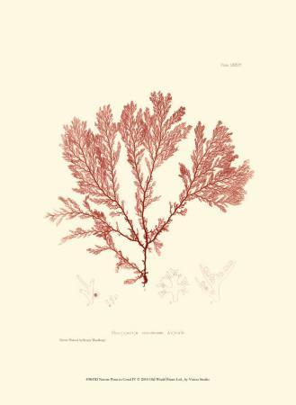 Nature Print in Coral IV Poster at AllPosters.com