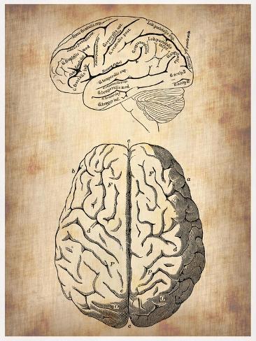 Vintage Brain Anatomy Art Print
