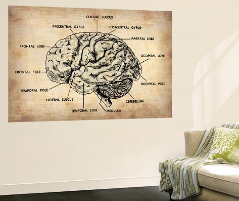 Vintage Brain Map Anatomy Wall Mural
