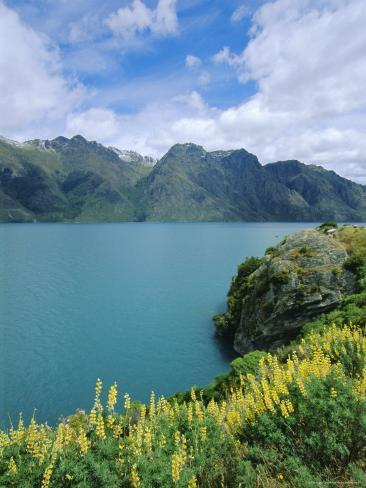 Yellow Lupins Beside Lake Wakatipu, Canterbury, South Island, New Zealand Photographic Print