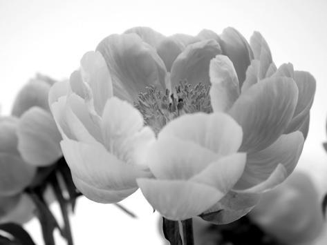 Delicate Blossom I Photo