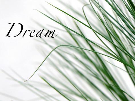 Dream: Reeds Photo