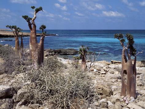 Socotra Island Ies in Arabian Sea, 180 Miles South of Arabian Peninsula Photographic Print