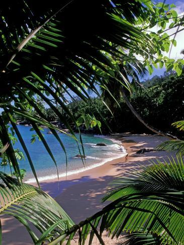 Tropical Foliage and Beach, Seychelles Photographic Print