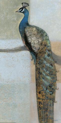 Resting Peacock II Art Print
