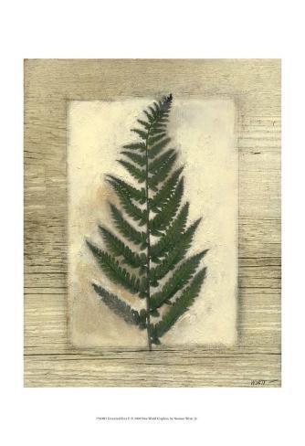 Texturized Fern II Art Print