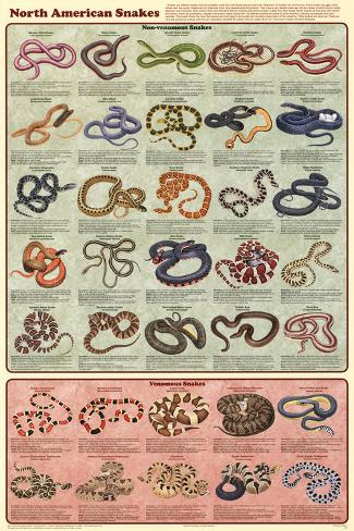 North American Snakes Educational Science Chart Poster Poster