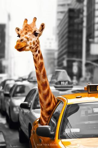 Nueva York - Safari Póster