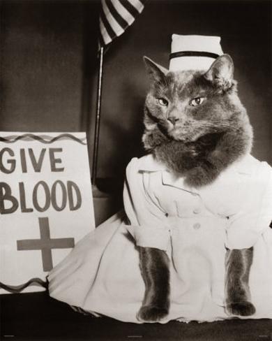Nurse Kitty Four Paws Mini Poster