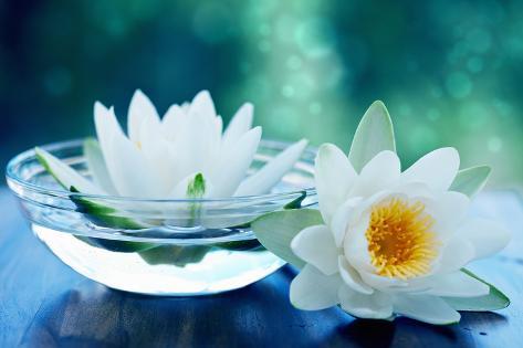 White lotus flower photographic print by olga miltsova at white lotus flower mightylinksfo