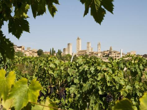 Towers of San Gimignano with Grapevines Producing Vernaccia Di San Gimignano Wine in Foreground Photographic Print