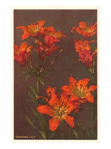 Orange Tiger Lilies Stampa artistica