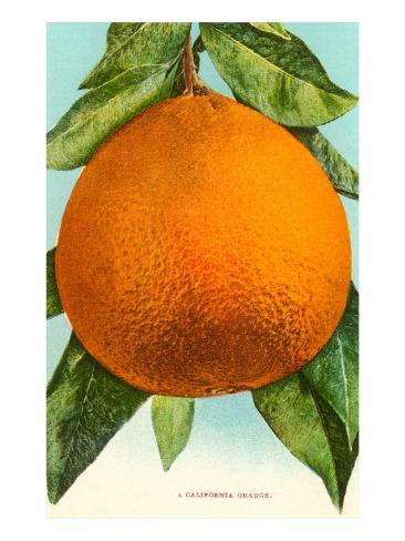 Oranssi Taidevedos