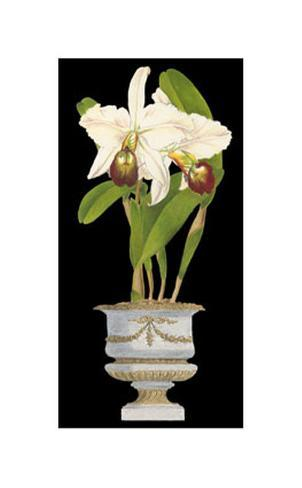 Orchids in Silver II Art Print