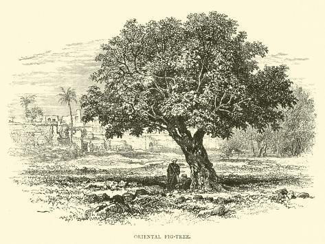Oriental Fig-Tree Lámina giclée