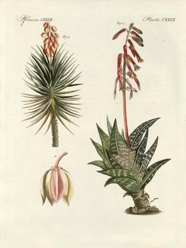 Ornamental Plant Stampa giclée
