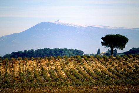 The Ventoux Mount and Wine AOC Vineyards Valokuvavedos