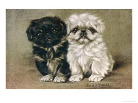Black and a White Pekingese Puppy Sit Close Together Giclee Print