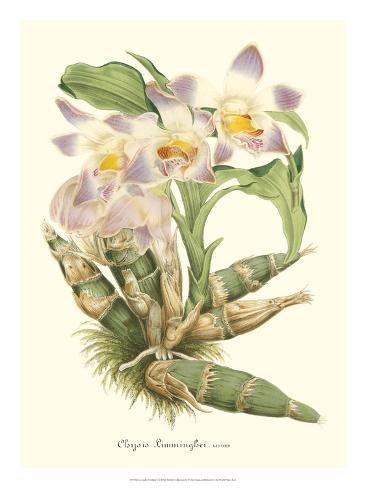 Lavender Orchids I Giclee Print