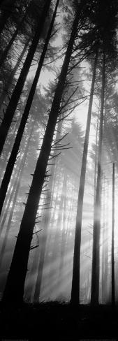 Pacific Stock Spencer Butte Park, Sunburst through Foggy Forest, Oregon Art Print