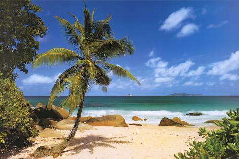 オールポスターズの palm beach tropical landscape photo art poster