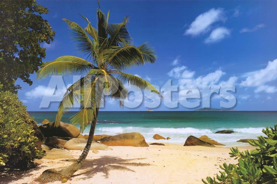 Palm Beach Tropical Landscape Photo Art Poster Print Prints