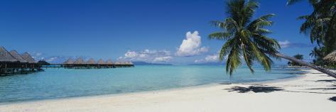 Palm Tree on the Beach, Moana Beach, Bora Bora, Tahiti, French Polynesia 写真プリント