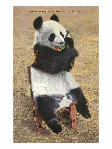 Panda, Forest Park Zoo, St. Louis, Missouri Art Print