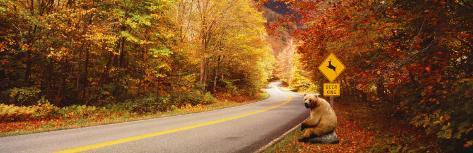 Autumn Road with Bear at Deer Crossing Sign, Vermont, USA Photographic Print