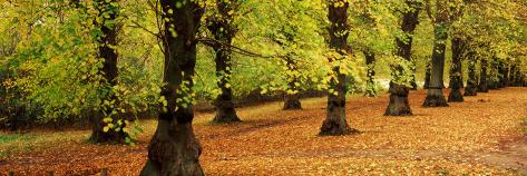 Autumn Trees in a Park, Clumber Park, Nottinghamshire, England Photographic Print